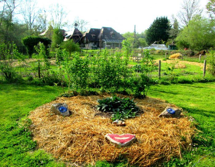 Potager Tortue permaculture